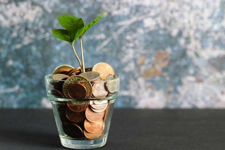 Plant in money pot