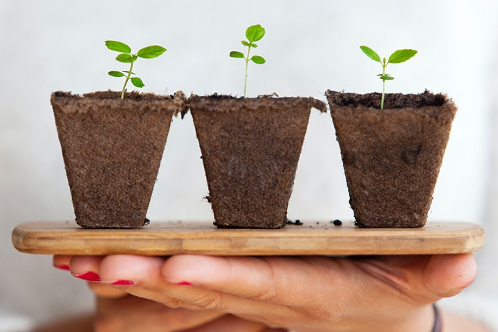 Finding your sweet spot for sustainable brand growth