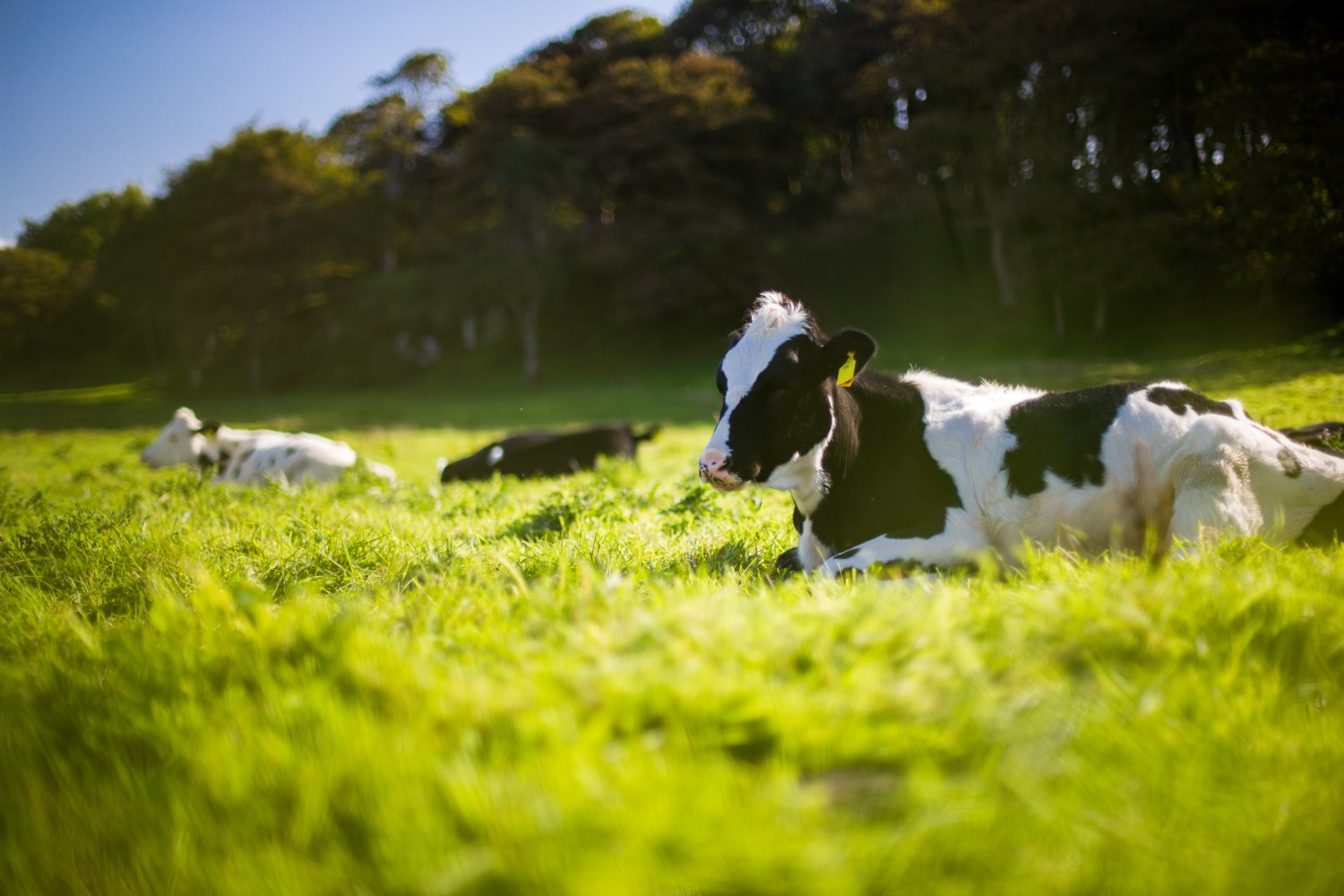 fonterra case study dairy sustainability